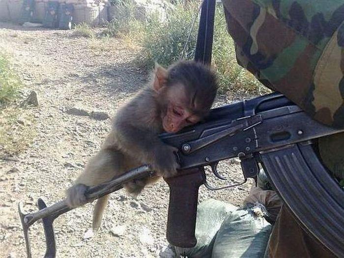 Monkey-AK47