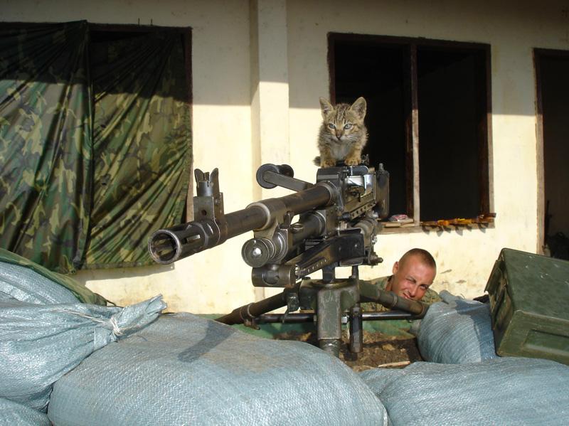 Kitten-M240G