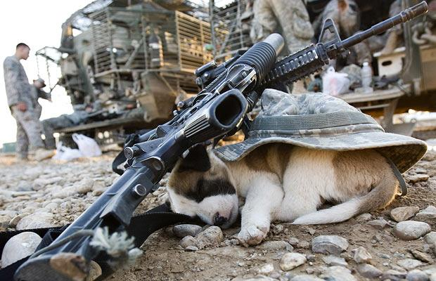 iraq-gun-dog-puppy-m4