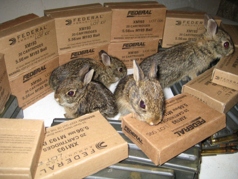 Federal-XM193-Bunnies-Rabbits-Ammo-Ammunition