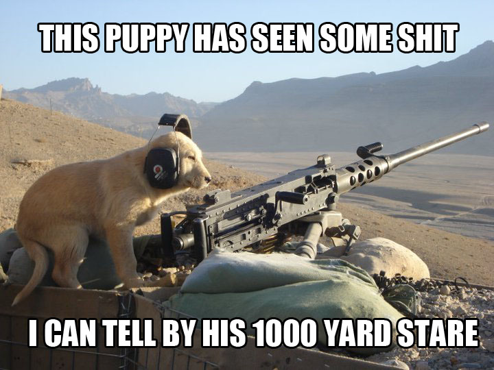 Dog-Puppy-Military-Browning-M2