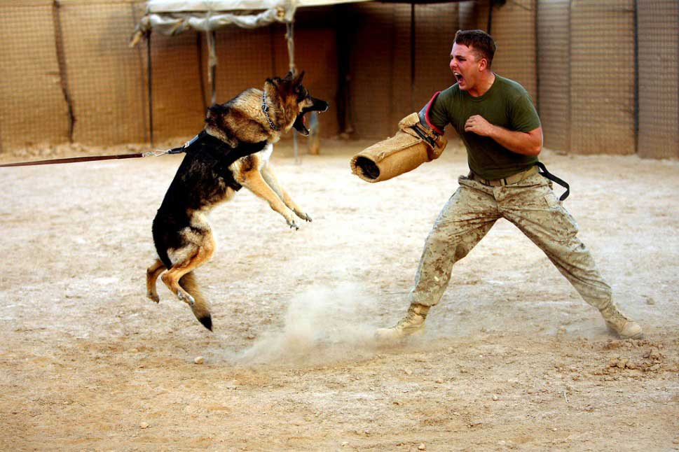 Sniper Training With Dogs