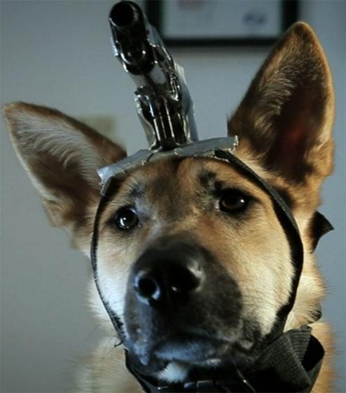 Gundog-cop-police