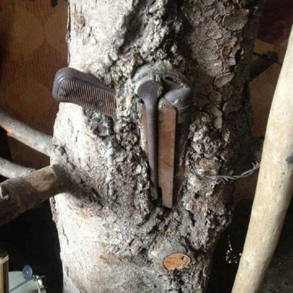 MP-40-grown-into-tree